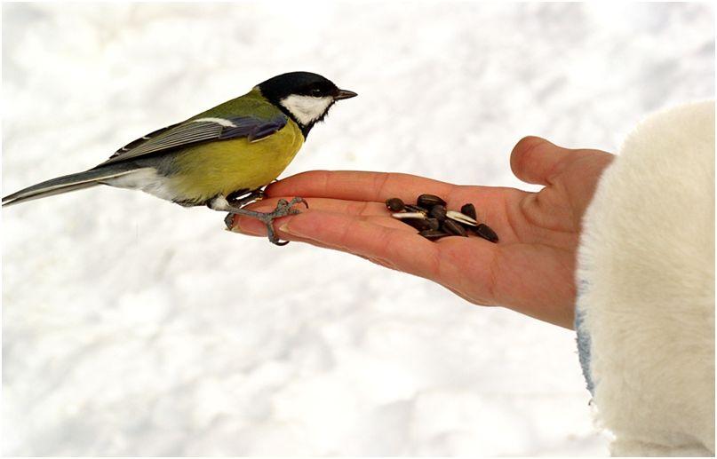 рассказ о птицах 2 класс